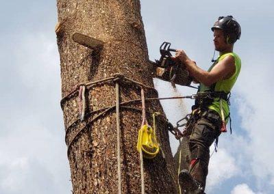 arborist tree services tree removal Kelowna BC