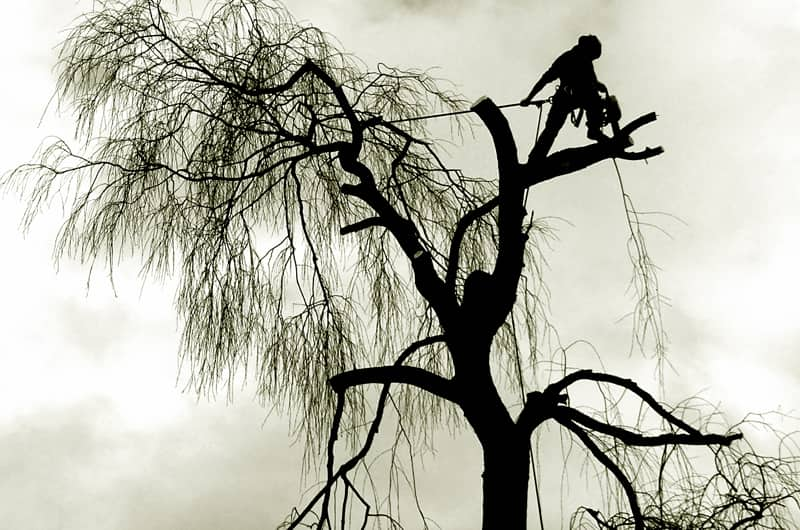 residential commercial tree care arborist