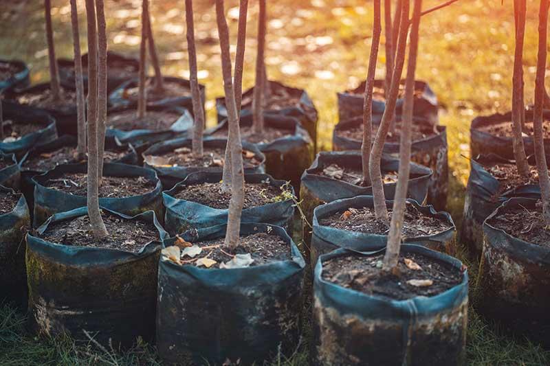 residential commercial tree care Kelowna Okanagan